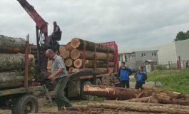 VIDEO Camion plin cu lemne fără acte depistat la Corbeni. Jandarmii au confiscat totul