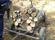 FURT LEMNE - Polițiștii au prins hoții mărunți și au confiscat 16 mc de lemn