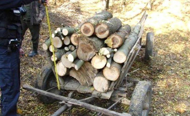 FURT LEMNE – Polițiștii au prins hoții mărunți și au confiscat 16 mc de lemn