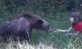 VIDEO Inconştienţă sau prostie ! Doi copii hrănesc un urs, părinţii îi filmează