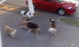 ACUM ! Familie cu copii atacată de maidanezi pe bulevardul din Curtea de Arges