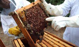 Ajutor de stat pentru apicultorii argeşeni -  20 lei/familia de albine
