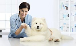 Cand trebuie sa fie duse animalele de companie la veterinar?