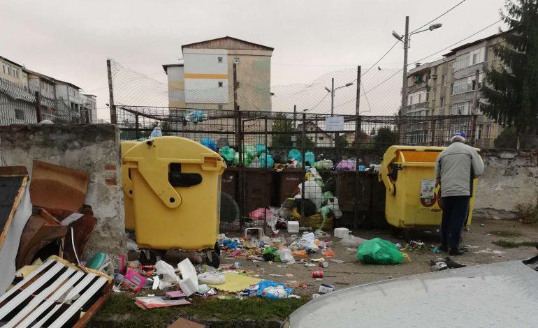 ARGEŞENII SESIZEAZĂ: Gunoaiele si maidanezii la Şcoala Basarab I, imagini dezolante