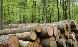 Şeful Romsilva: În fiecare an, se taie neautorizat din pădurile statului 50.000 mc